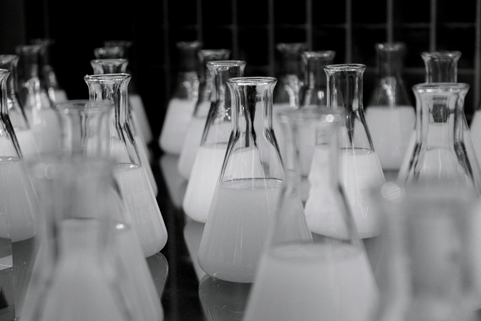 Black and white photograph of rows of Erlenmeyer flasks.